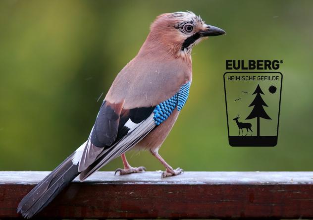 Eulbergs heimische Gefilde: Der Gesang der Vögel